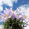 Beautiful Spring Flower Blossom In Sky Background by Govindji Patel