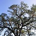 Beautiful Tree Blue Sky Sunshine by Matt Harang