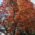 Beautiful Tree by Darrell MacIver