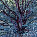 Beautiful Tree by Miranda Strapason