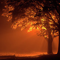 Beautiful Trees At Night With Orange Light by Simon Bratt Photography LRPS