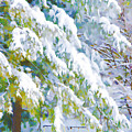 Beautiful Trees Covered With Snow In Winter Park by Jeelan Clark