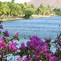 Beautiful Waikiki by Kathryn Carlin