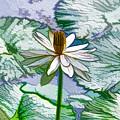 Beautiful White Water Lilies Flower by Jeelan Clark