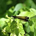 Beautiful Wings by Edna Weber