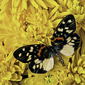 Beautiful Wings On Yellow Mums by Garry Gay