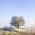 Beautiful Winter Background With Snow Tipped Trees by Jorgo Photography - Wall Art Gallery