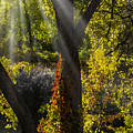 Beautiful Woodlands by Garry Gay