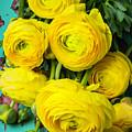 Beautiful Yellow Ranunculus by Garry Gay