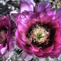 Beauty Among The Thorns by Donna Kennedy