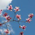 Beauty Blooms by Sara Hudock