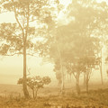 Beauty In A Forest Fog by Jorgo Photography - Wall Art Gallery