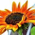 Beauty In A Sunflower by Karen Majkrzak