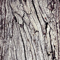 Beauty In The Cracks Of Old Wood by Jozef Jankola
