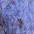 Beauty In The Thorns by Dottie Phelps Visker
