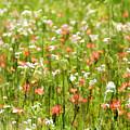 Beauty Is Spring by Carolyn Fletcher