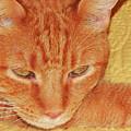 Beauty Of A Cat by Jan Gelders