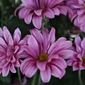 Beauty Of Pink by Brenda Mardinly