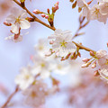 Beauty Of Spring by Rima Biswas