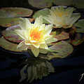 Beauty Of The Water Lily by Jane Coenen