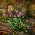 Beauty On An Old Stone Wall by Carla Parris