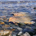 Beauty On The Shore by LKB Art and Photography