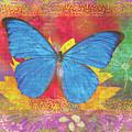 Beauty Queen Butterfly by JQ Licensing