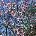 Beautiful Spring. Blooming Tree 2 by Sofia Metal Queen