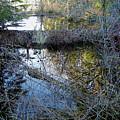 Beaver Dam by Linda Carruth