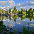 Beaver Dam Reflection In Grand Teton Np by Ray Mathis
