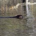 Beaver Glide by William Tasker
