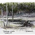 Beaver Lodge by Betsy Derrick