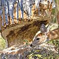 Beaver Wannabe by Gary Beeler