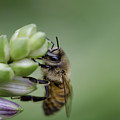 Busy Bee by Andrea Silies