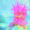 Bee Balm by Tom Singleton