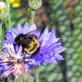 Bee Bee by Peter Mowry