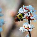 Bee Blossom by Denise Irving