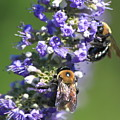 Bee Cause by Bev Veals