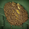 Bee Cluster by Kelley King