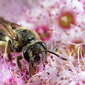 Bee Doing Bee Things by Brian Hale