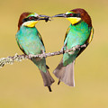 Bee-eater Valentine Heart by Alan Grant
