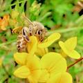 Bee by Erin Finnegan