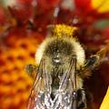 Bee Five - by Silvana Siudut