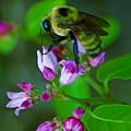 Bee Good 2 by Ben Upham III