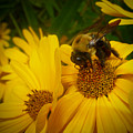 Bee Happy by Dave Bosse