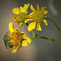 Bee Happy by Elaine Malott