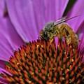 Bee Happy by Glen Baker