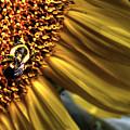 Bee Happy by Guy Harnett
