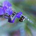 Bee Harmony by Mary Lou Chmura