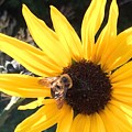 Bee Haven by Patti Koss
